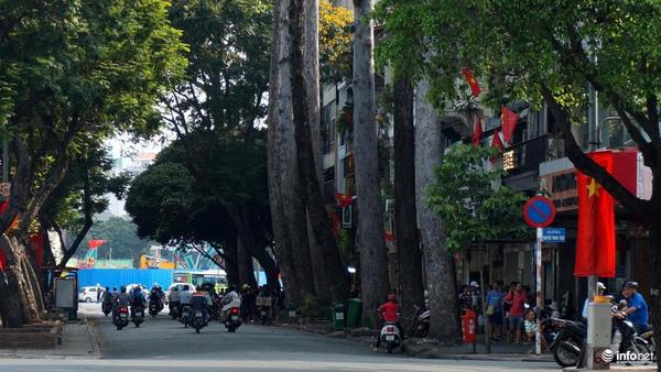 TP.HCM: Nhiều cây cổ thụ cao 25m sẽ bị chặt để xây đường metro ngầm