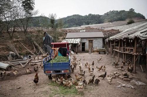 Trung Quốc có dễ thay áo nền nông nghiệp? - Ảnh 1.