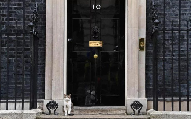 Trong khi chính trường Anh chao đảo, giới truyền thông lại bị thu hút bởi chú mèo nhà Thủ tướng - Ảnh 1.