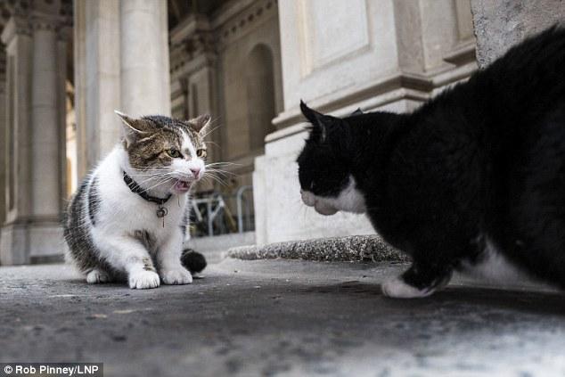 Trong khi chính trường Anh chao đảo, giới truyền thông lại bị thu hút bởi chú mèo nhà Thủ tướng - Ảnh 6.