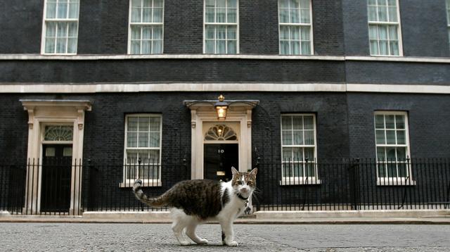 Trong khi chính trường Anh chao đảo, giới truyền thông lại bị thu hút bởi chú mèo nhà Thủ tướng - Ảnh 2.