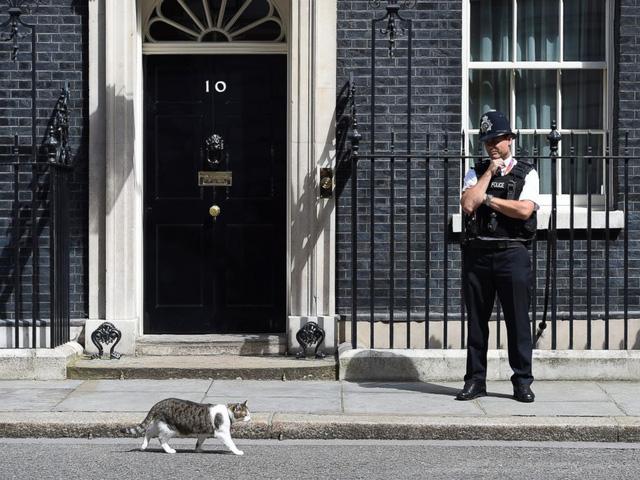 Trong khi chính trường Anh chao đảo, giới truyền thông lại bị thu hút bởi chú mèo nhà Thủ tướng - Ảnh 4.