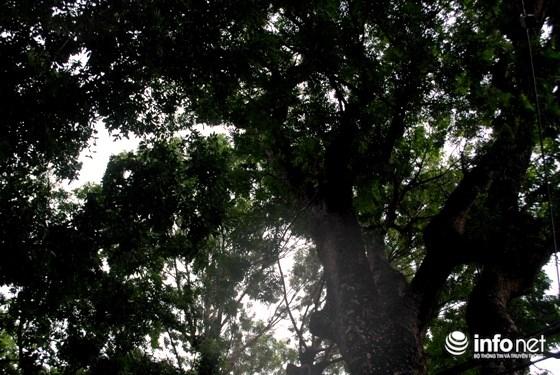 Nhiều người tỏ ra tiếc nuối hàng cây nhưng cho rằng trong quá trình phát triển TP không thể tránh khỏi việc phải đánh đổi.