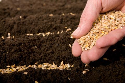 Kinh doanh hạt giống